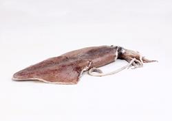 Chinese squid (skin on)